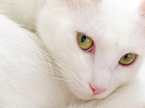Photography-Pets-3
