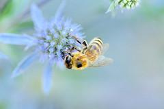 Pastel bee