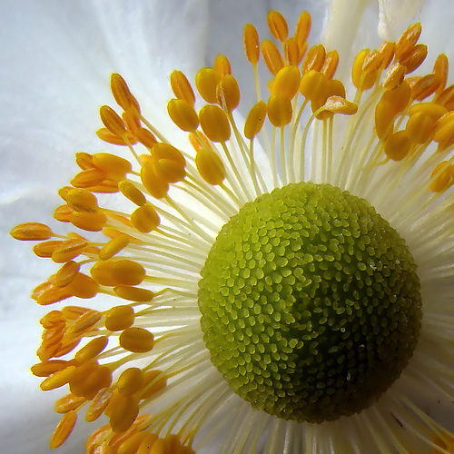 Macro Photography For Beginners