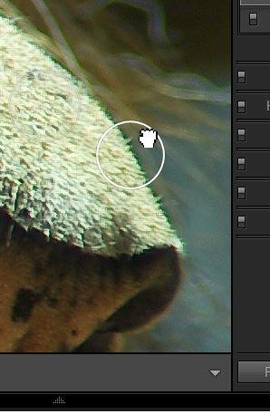 spot_drag.jpg