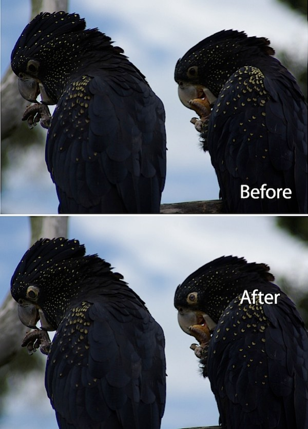 animal-eyes-fix-lightroom-before-after.jpg