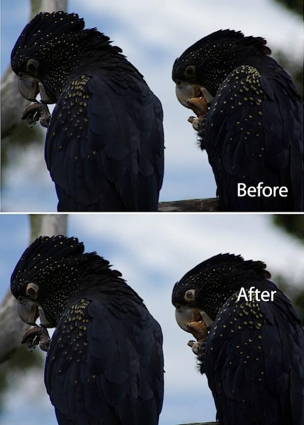 animal-eyes-fix-lightroom-before-after.jpg