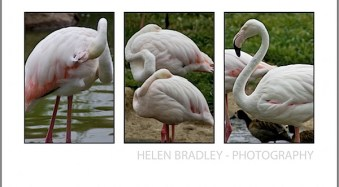 How to Select and Compose a Triptych in Lightroom