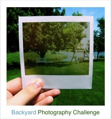 Backyard Photography Challenge