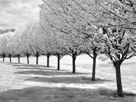 Infrared Trees by Christina Ferrin