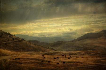 Home On The Range by Janel Kaufman