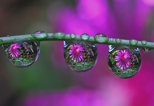 41 delicious photographs of flowers