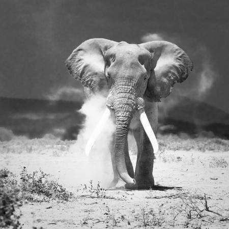 old elephant, amboseli national park, kenya by Konstantin Kalishko