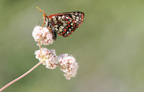 8 Tips for Photographing Butterflies