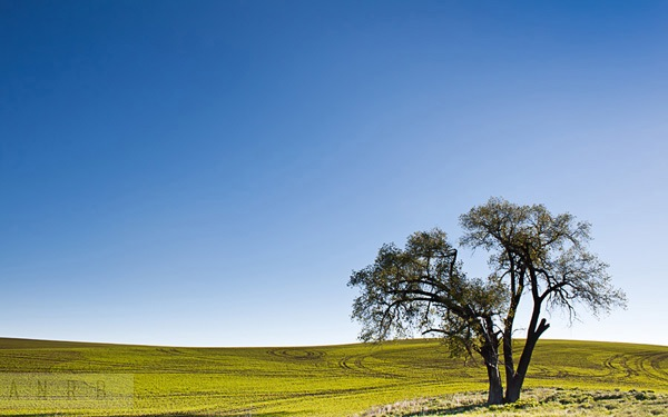 Landscape Composition 88.jpg