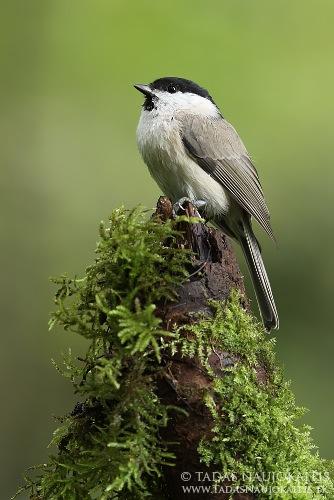 5-birdphotography.jpg