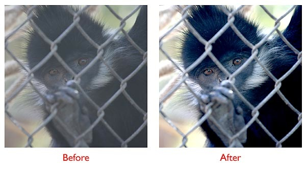 monkey-before-after.jpg