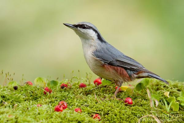 How to do Bird Photography Near Feeders