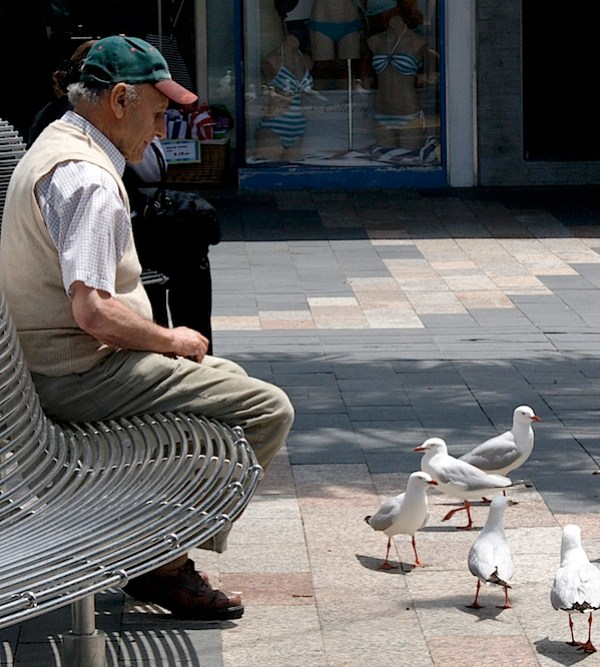 Man and pigeons.jpg