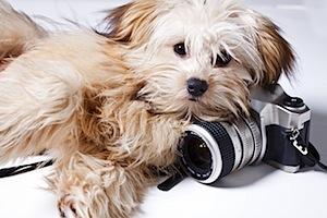 puppy-camera.jpg