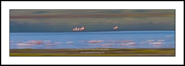 Image: Flamingos In Nogorongoro Crater - Tanzania