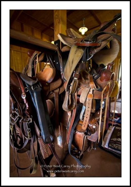 Image: Harness At Piiholo Ranch - Maui, Hawaii, USA