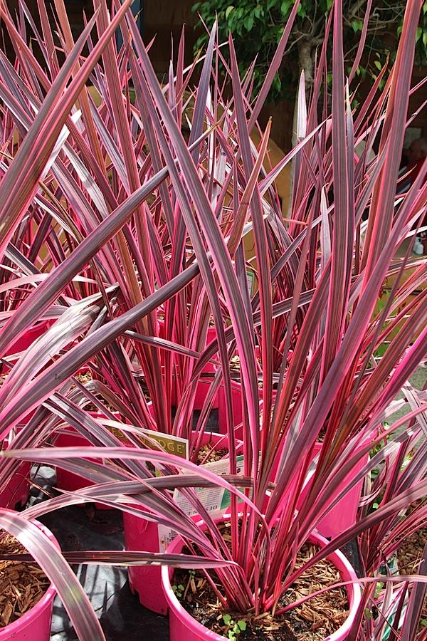 Coloured plant.JPG