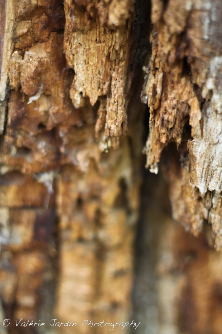 Image: Detail of dead tree stump