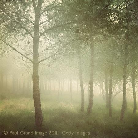 7 Misty pines 1.jpg