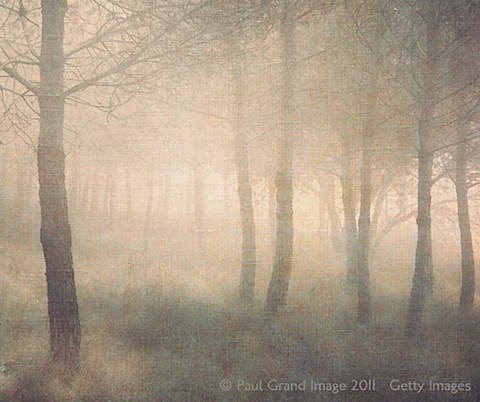8 Misty Pines 2.jpg