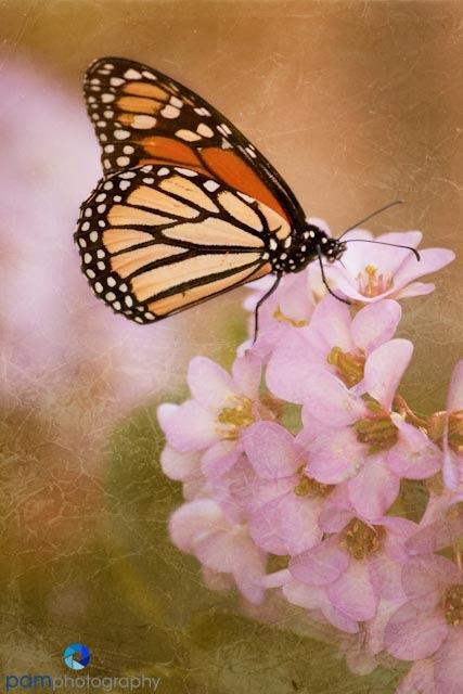 9 Butterfly with purple flowers.jpg