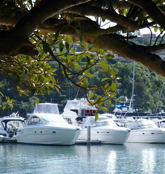 船和树.JPG
