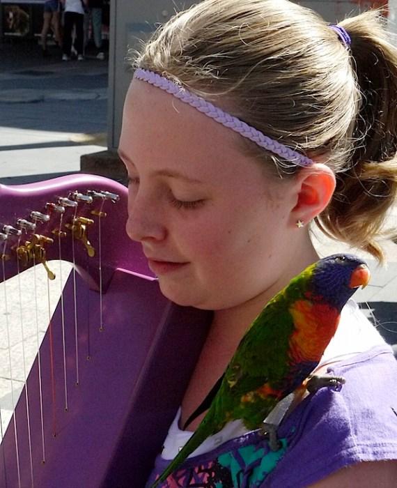 女孩竖琴鹦鹉2.JPG