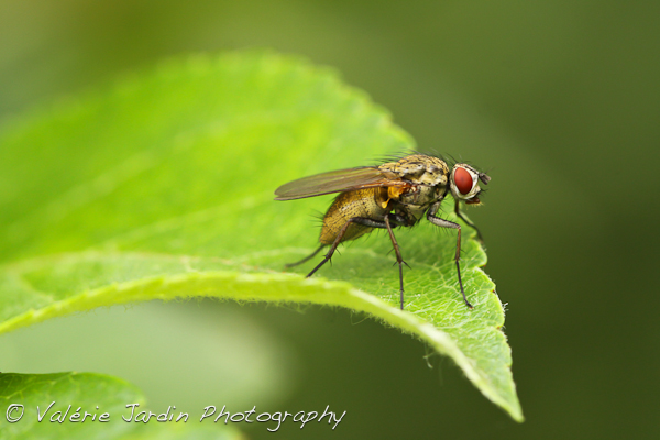 Image: I recently discovered macro photography and it's been so much fun. I can go out in my own...