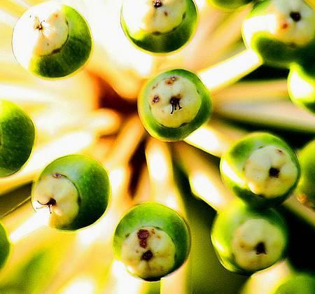 Image: Macro plant by Ken Simm