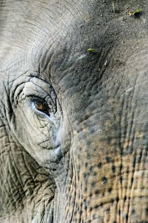 Image: Thai Elephant by JenFu Cheng