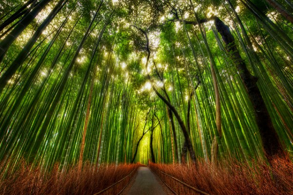 The Bamboo Forest and some great Twitter Lists to follow