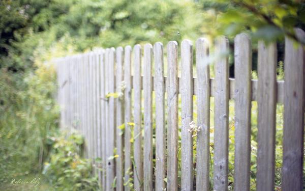 Image: Film | Nikon FM2 | Nikkor 50mm 1.2 @ f/1.2 | Kodak Portra 400NC