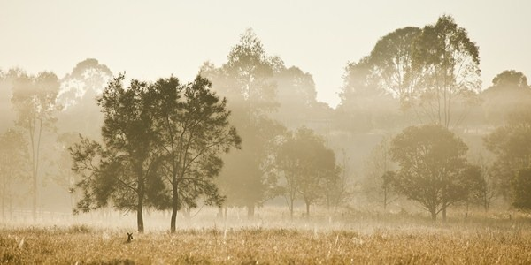 Foggy, glowing sunrise near Minnie Waters (Near Grafton, NSW)
