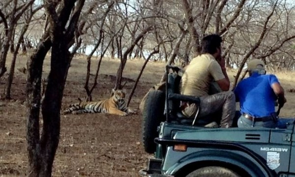 Image: Tiger and film crew, Ranthambhore National Park, India