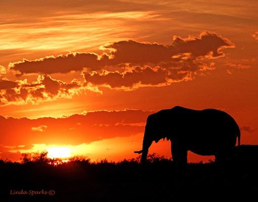 Africa_1_338_Elephant_sunset_signed_tiny