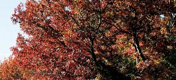 秋天的树木2 17.5.12.jpg