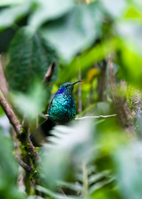 Travel Photography Inspiration Project: Costa Rica