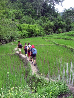 Trekking through rice fields
