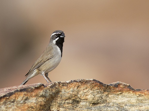 8 Tips For Photographing Birds