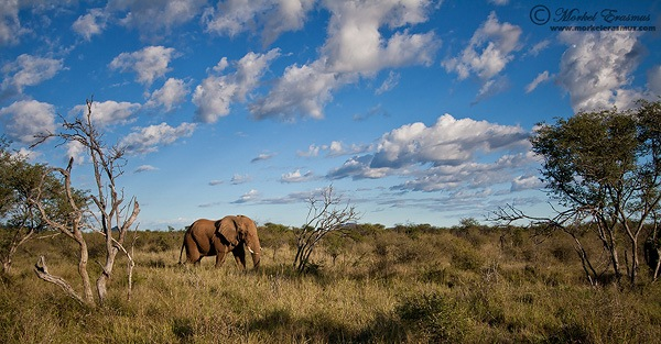 elephant in the landscape as wildlife photography