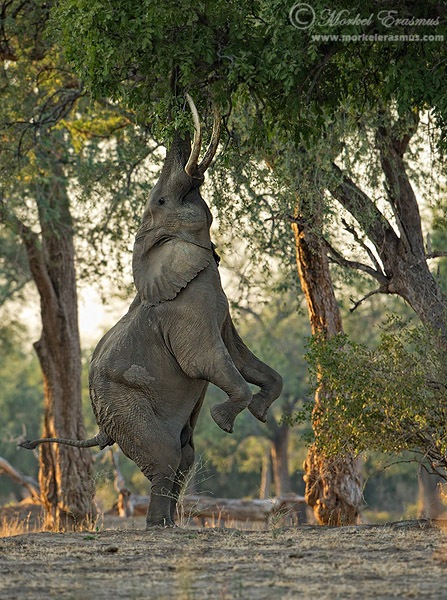 Elephant_Vertical.jpg