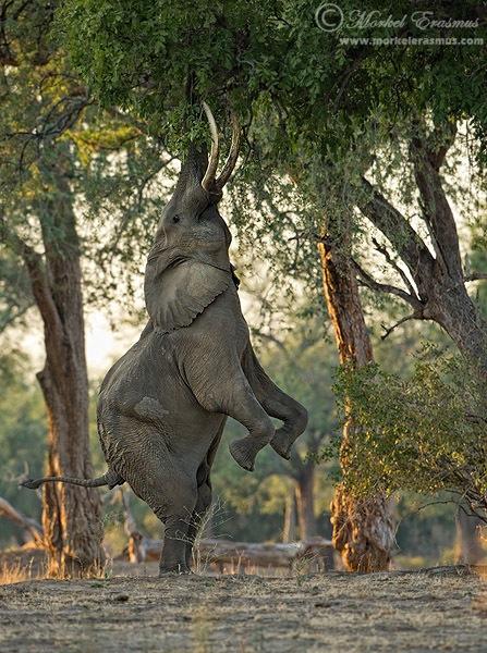 Elephant_Vertical.jpg