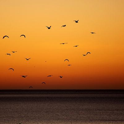 dawn - with birds