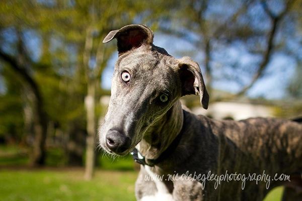 dog photography 2.jpg