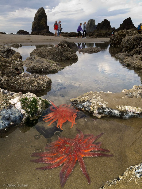 Sun Starfish Cannon Beach V