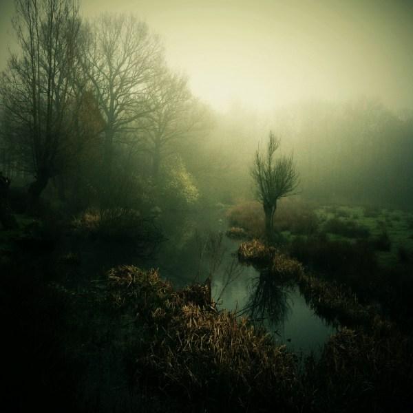 Image: Swamped