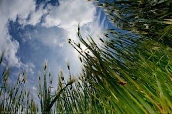 Wheatfield fisheye.jpg
