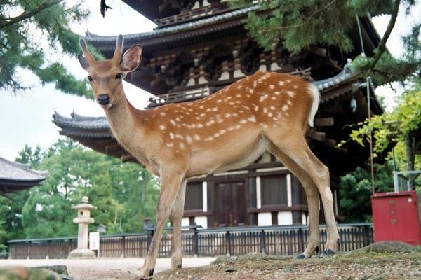 DPS Japan 04