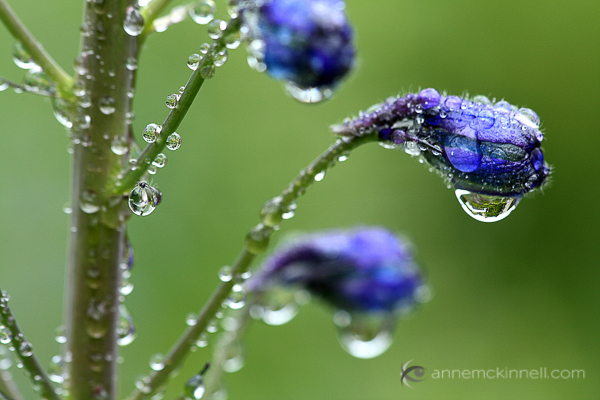 Flowers and water drops by Anne McKinnell